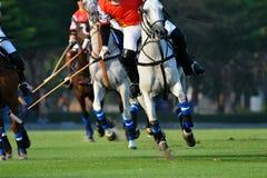 Fokusera hästen i polomatch arkivbild
