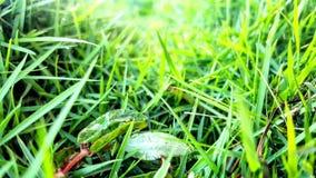 Fokusera på gräset arkivfoto