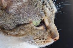 fokuserad katt Arkivbild