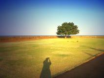 fokuserande tree Royaltyfria Foton