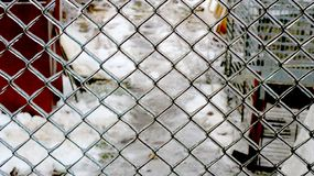 Fokuserat djupfryst staket i vintern arkivfoto
