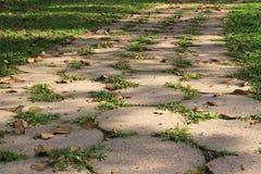 Fokusfußweg im Garten Stockfotografie
