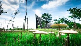Fokuspilz und Prinz Mahidol Hall Background lizenzfreies stockbild