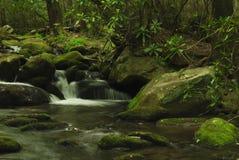 folage verde fertile con il flusso Fotografia Stock