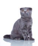Fold kitten on white Stock Photos