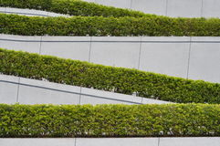 Fold sunk fence and green plant Stock Images
