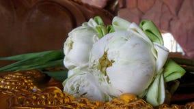 Folded blooming worship lotus Royalty Free Stock Photos