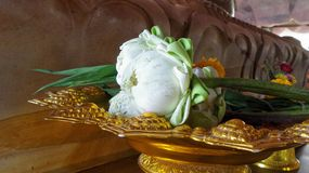 Folded blooming worship white  lotus Royalty Free Stock Photography