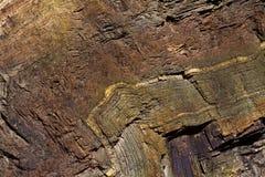 Folded Chert Layers At Rainbow Rock, Oregon Royalty Free Stock Photos