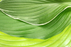 Folded decorative leaf pattern Royalty Free Stock Photos