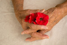 Folded hands of elder female senior Royalty Free Stock Images