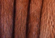 Folded Muskrat Fur Stock Photos