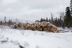Folded trees lie on the snow. Near the forest Royalty Free Stock Photos