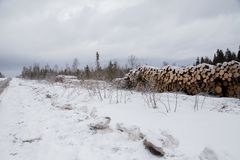 Folded trees lie on the snow. Near the forest Royalty Free Stock Images