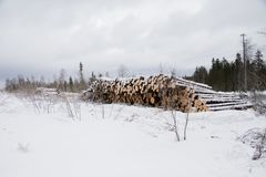 Folded trees lie on the snow. Near the forest Stock Image