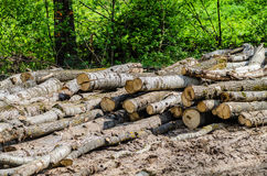 Folded trees are stacked, there is deforestation Royalty Free Stock Photos