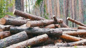 Folding logs felled into a heap stock footage