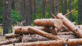 Folding logs felled into a heap. Felled Tree Trunks in the Forest. The felled trees fall on a pile of firewood. Cut logs are stacked in a forest. Still summer stock video footage