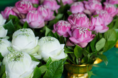 Folding lotus bouquet Royalty Free Stock Images