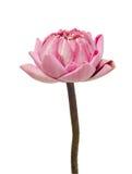 Folding lotus thai style Royalty Free Stock Photo