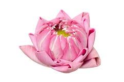 Folding lotus thai style Stock Images