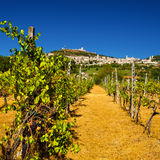 Fole Rocca Maggiore do vinhedo em Úmbria, Assisi durante uma SU quente Fotografia de Stock