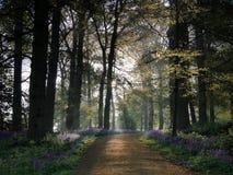 Folgen Sie dem Glockenblume-Weg Lizenzfreie Stockfotos