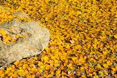 Folha/árvore do outono com natureza bonita em Nova Zelândia Fotos de Stock