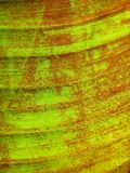 Folha abstrata da banana Imagens de Stock
