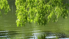 Folha acima do lago filme