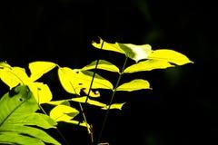 A folha amarela fotos de stock