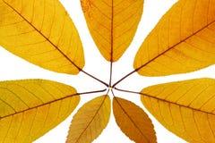 Folha amarela Imagem de Stock Royalty Free