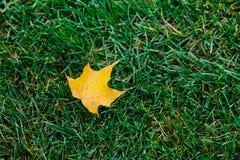 A folha amarela caiu da árvore na grama verde Folha do outono Cores brilhantes nave Copie o espaço Tiro horizontal exterior estaç fotografia de stock royalty free