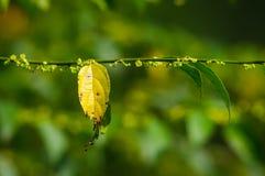 Folha amarela com fundo da natureza Fotos de Stock Royalty Free