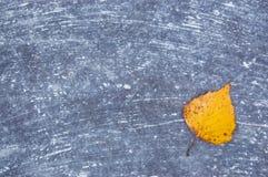 A folha amarela do outono em uma superfície concreta salpicou com a pintura Fotos de Stock