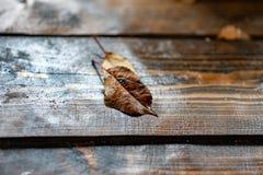 Folha amarela do outono que encontra-se em uma tabela de madeira fotografia de stock royalty free