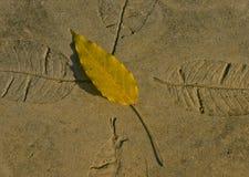 Folha amarela e folhas gravadas Imagens de Stock
