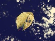 Folha amarela na água fotos de stock