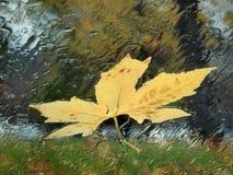 Folha amarela na janela de carro chuvosa Fotografia de Stock
