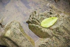 Folha amarela nas pedras Fotos de Stock Royalty Free