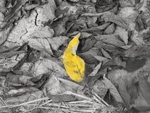 Folha amarela no fundo seco da folha Imagens de Stock