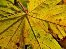 Folha amarela no outono Fotos de Stock