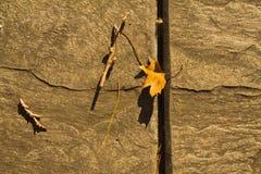 Folha ao lado da madeira Ainda vida da natureza na cidade fotografia de stock royalty free