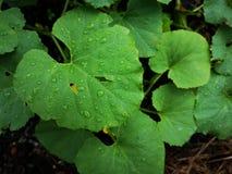 Folha após a chuva fotografia de stock
