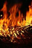 Folha ardente do coco Fotos de Stock Royalty Free