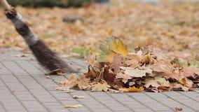 Folha arrebatadora do líquido de limpeza de rua na pilha no parque do outono, ocupação baixo-paga vídeos de arquivo