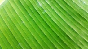 Folha ascendente fechado da banana Fotografia de Stock