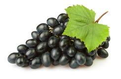Folha azul das uvas Imagens de Stock
