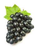 Folha azul das uvas Imagem de Stock Royalty Free