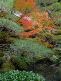 Folha bonita do outono das folhas de bordo em Kyoto imagem de stock